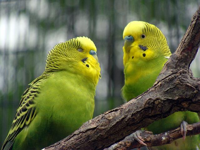 bird-834511_640